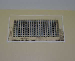 indoor air quality Dubai - Mildew